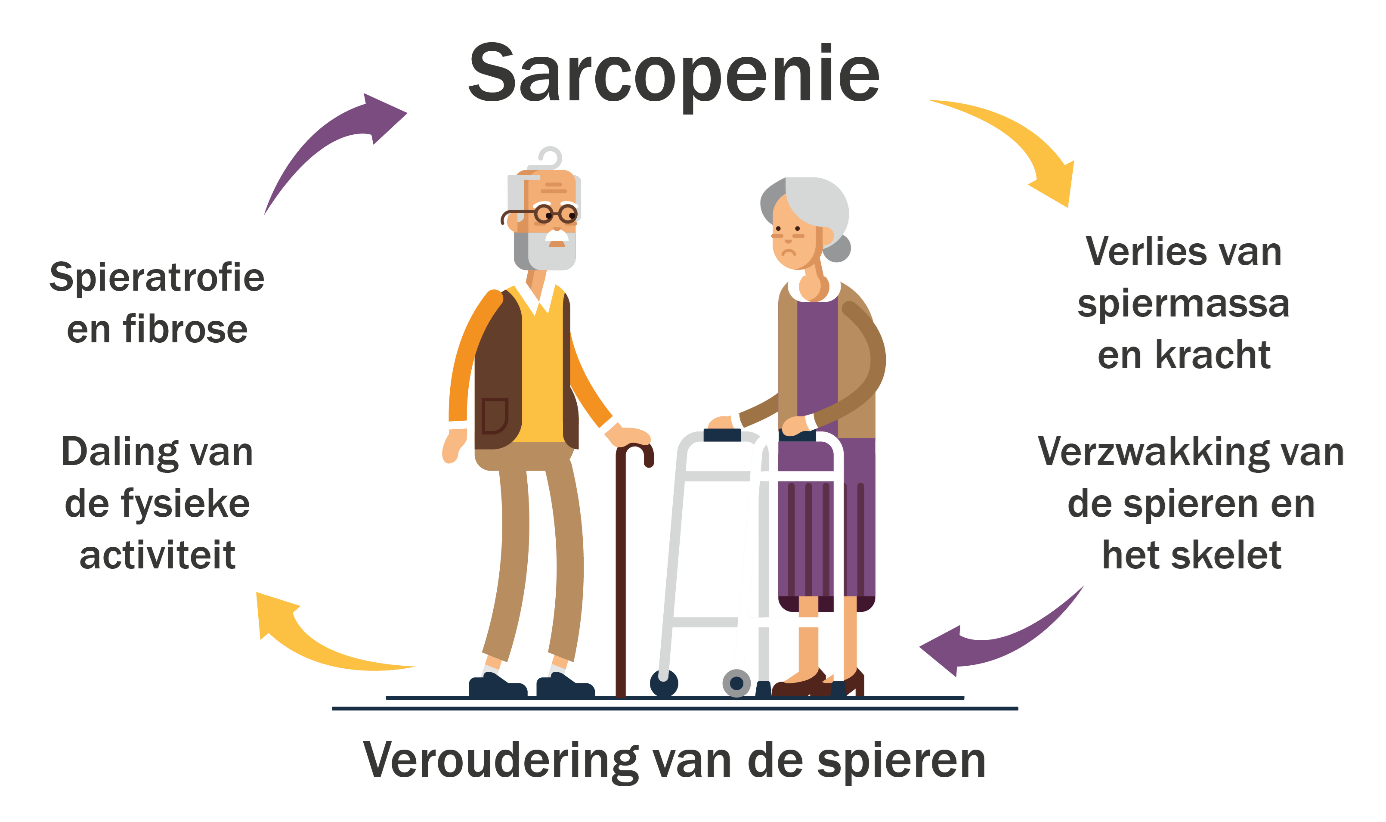 Sarcopenie