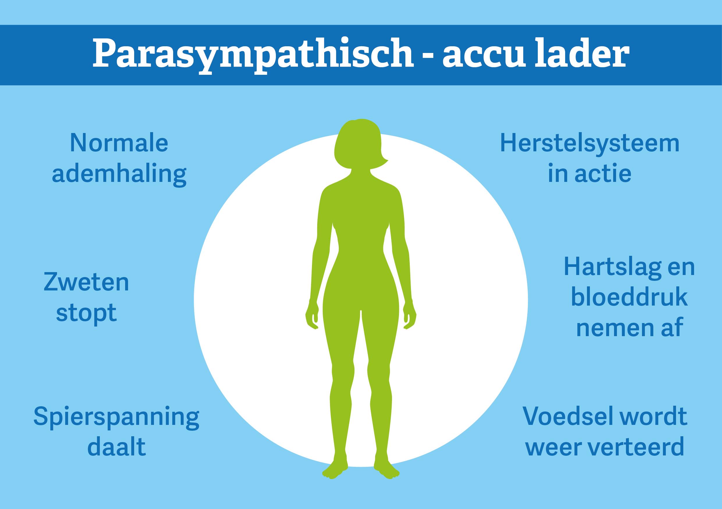 Parasympatische zenuwstelsel